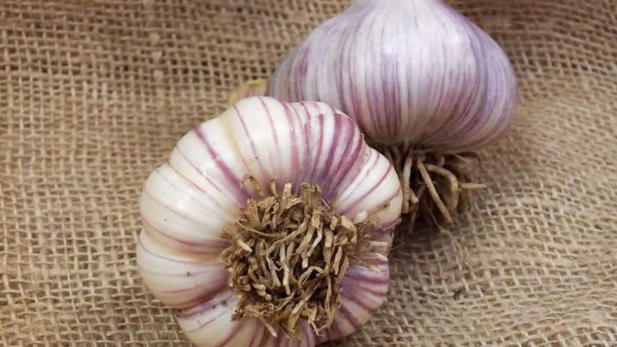 Fall Garlic! How do you plant it?