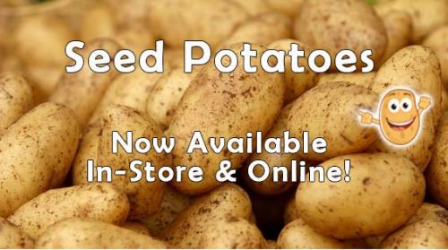 Seed Potatoes Are Here!