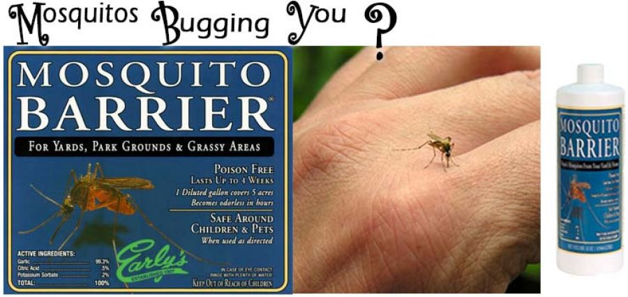 The No-Chemical, No-Poison Answer To Your Mosquito Problem!