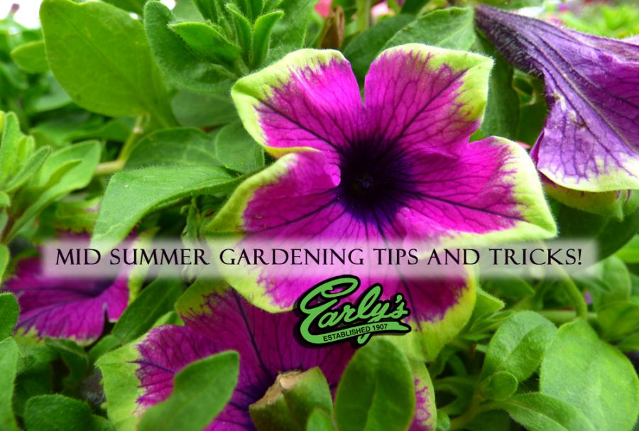Mid Summer Gardening Tips!
